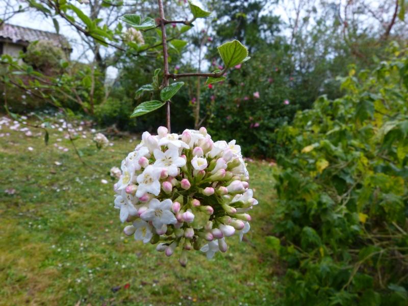 avril, jardin fébrile - Page 3 Vivurn10