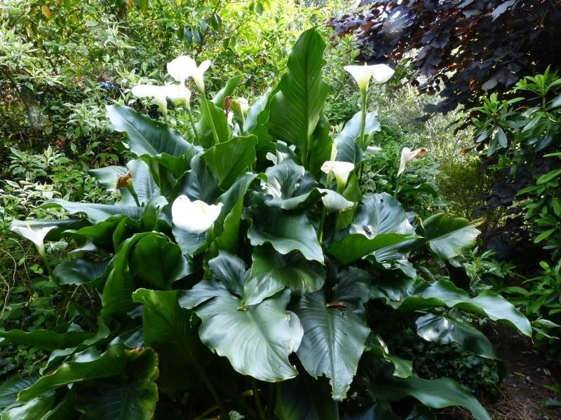joli mois de mai, le jardin fait à son gré - Page 4 Zanted10