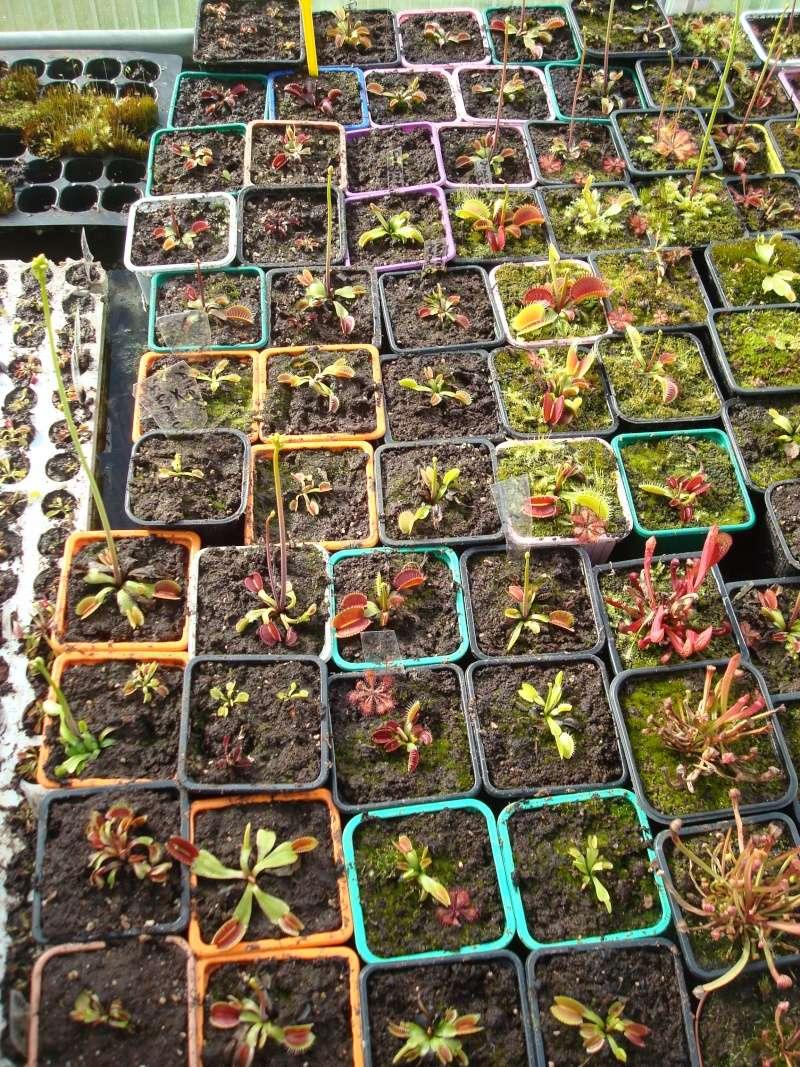 Suivi semis et germination Dionaea [Ted82] - Page 10 Dsc02132