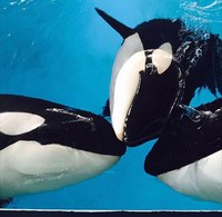 [Russie] Un total de 8 orques capturées - Page 17 Qntir410
