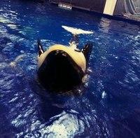 [Russie] Un total de 8 orques capturées - Page 17 Zsx-ar10