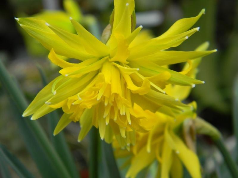 avril, jardin fébrile Bulb10