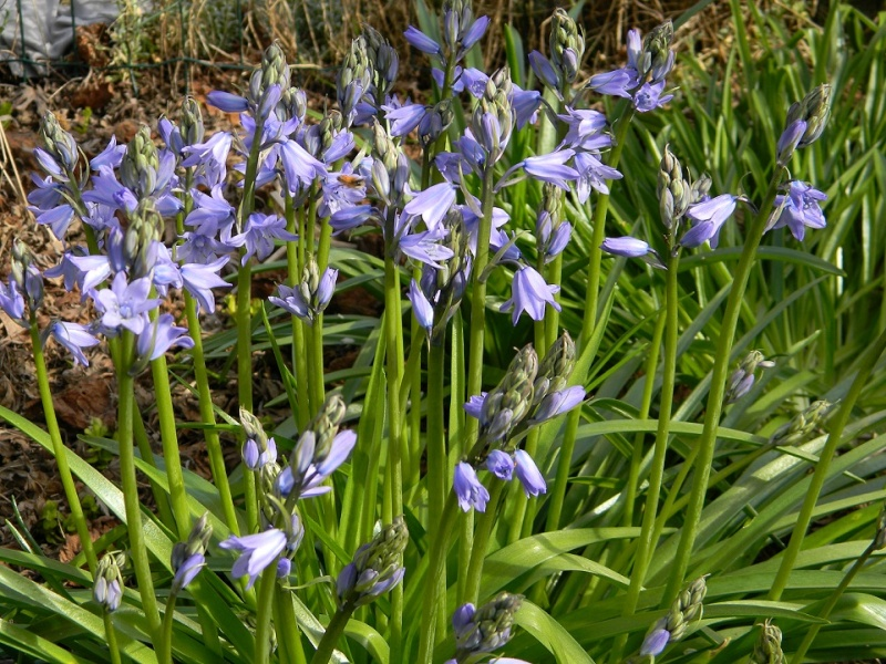 avril, jardin fébrile Bulb110