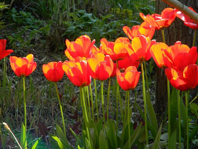 joli mois de mai, le jardin fait à son gré Ja110