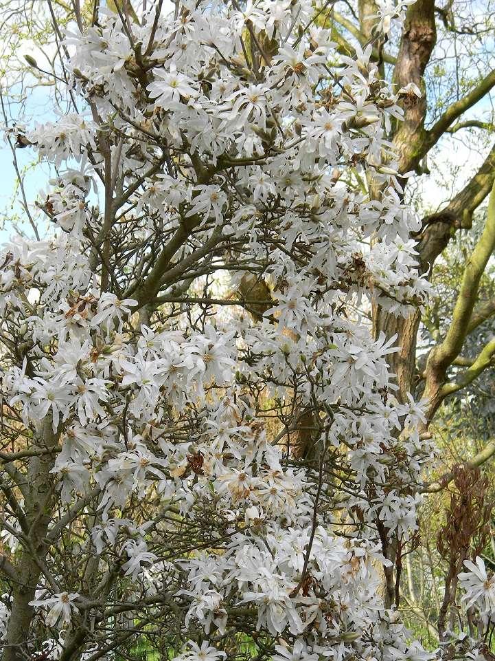 avril, jardin fébrile Magno10