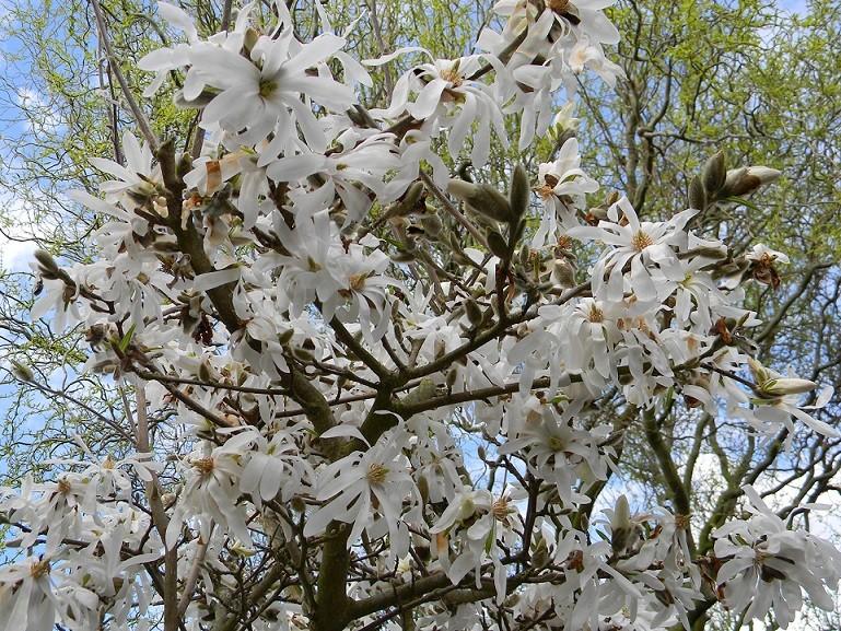 avril, jardin fébrile Magno110