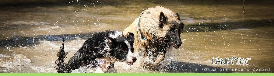 Canisport, le forum des sports canin !