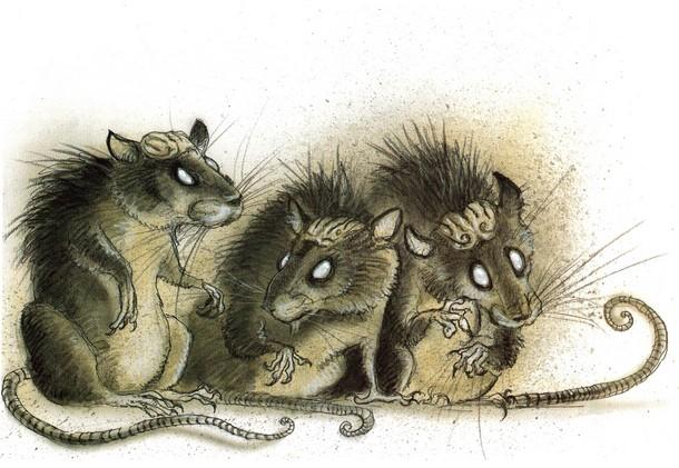 Des rats dans la cave ! (janvier 2016) Rat-cr10