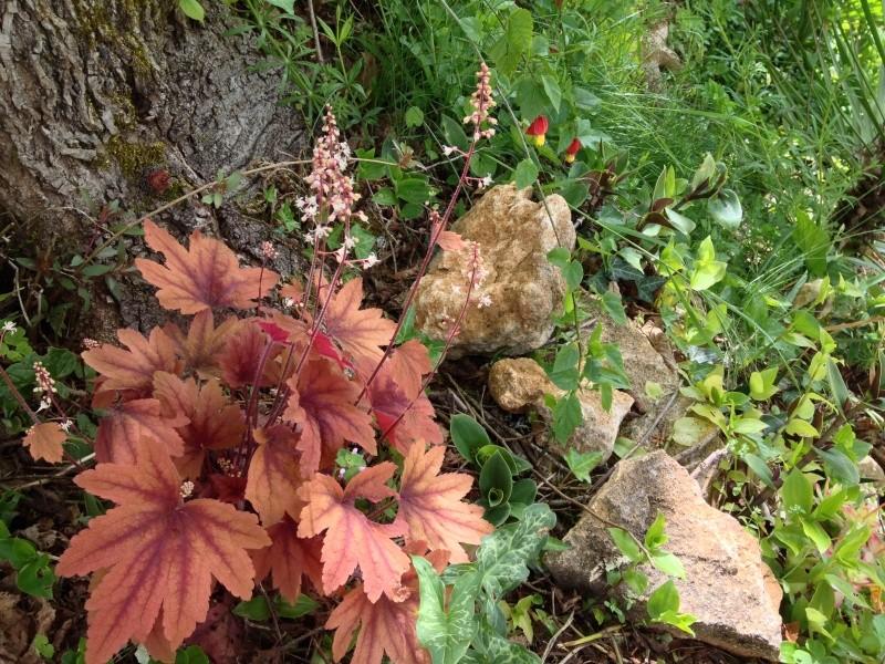 joli mois de mai, le jardin fait à son gré Img_2510