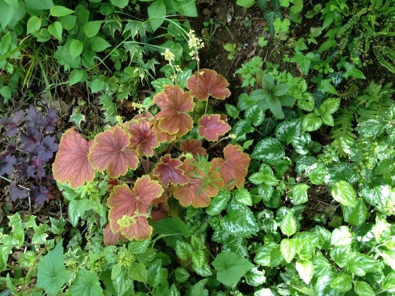 joli mois de mai, le jardin fait à son gré Img_2511