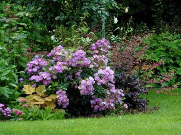 lavender friendship - Page 7 P1440710