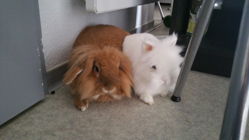 Nos lapins ne sont pas orphelins! Où sont les fratries? 20160520