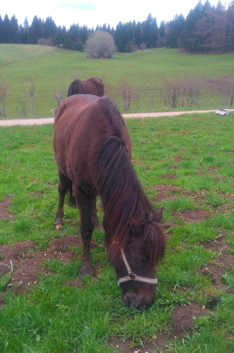 HAVANE - OI poney  née en 1995 - adoptée en mars 2014 par dona carlota - Page 2 17avri27