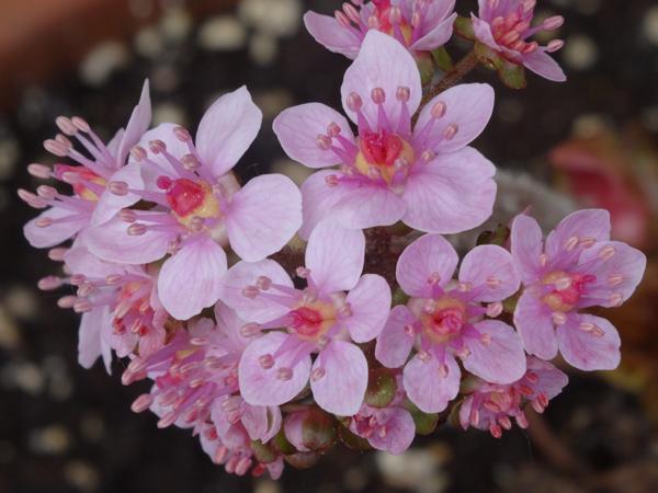joli mois de mai, le jardin fait à son gré - Page 2 Darmer10
