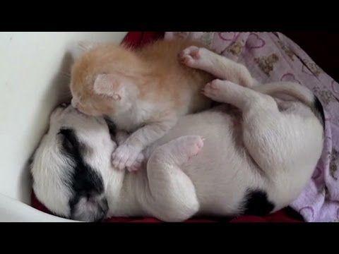 De belles images d'amitié - Page 2 0cef4610