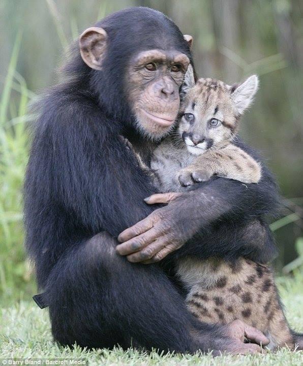 De belles images d'amitié - Page 3 10943710