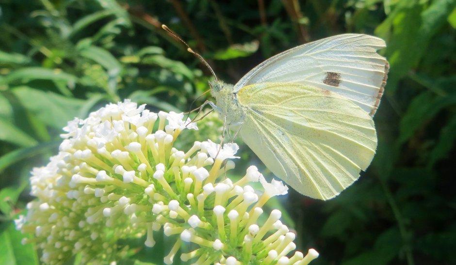 superbes papillons! 25032410