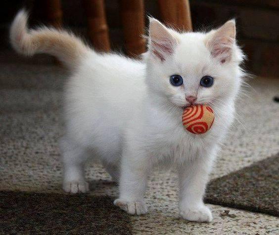 Pour les amoureux des chats 37236210