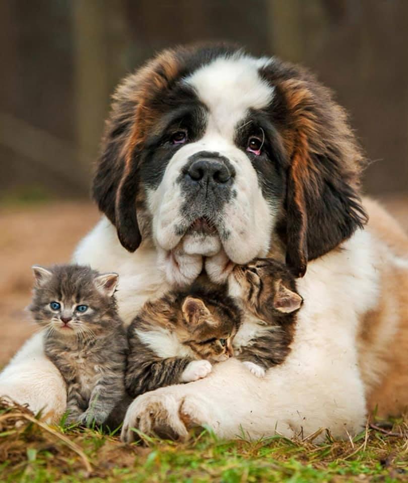 De belles images d'amitié - Page 2 39940910