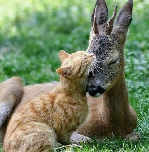 De belles images d'amitié - Page 2 40744810