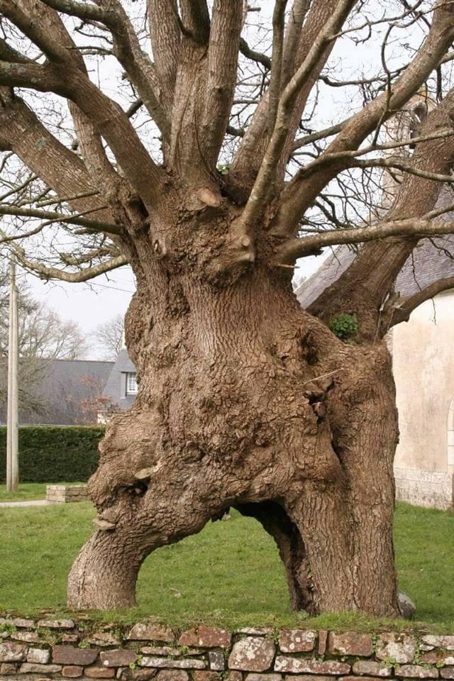 Hommages aux arbres - Page 4 41983110