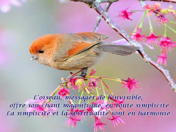 L'oiseau est un messager 42918110