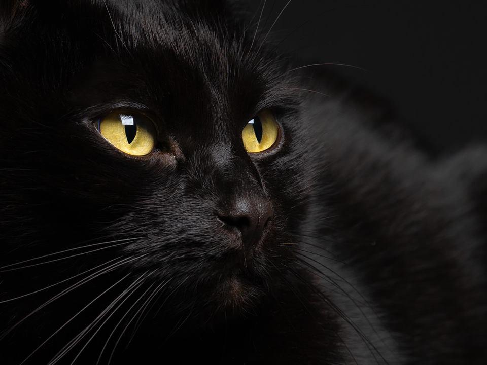 Pour les amoureux des chats 44080610