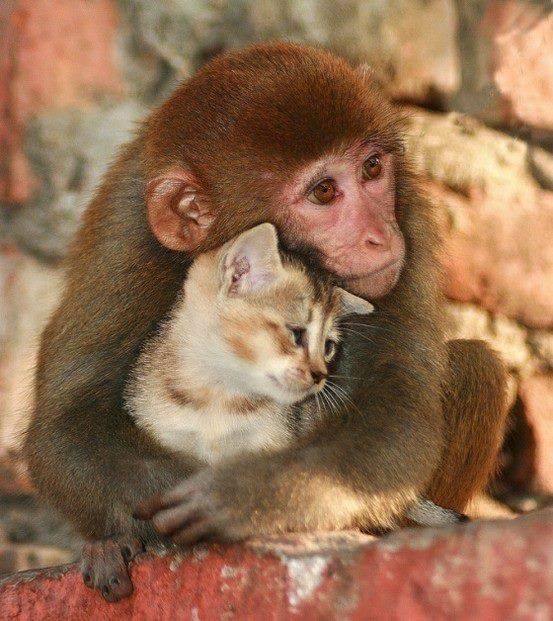 De belles images d'amitié - Page 2 44511710