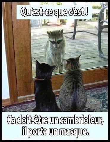 Pour les amoureux des chats 46443310