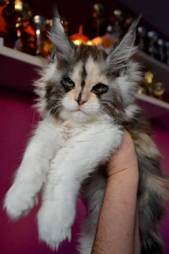 Pour les amoureux des chats 47015810