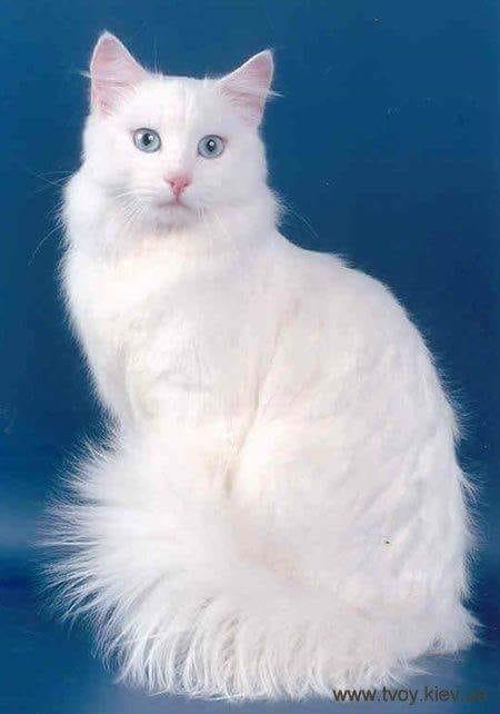 Pour les amoureux des chats 48362510