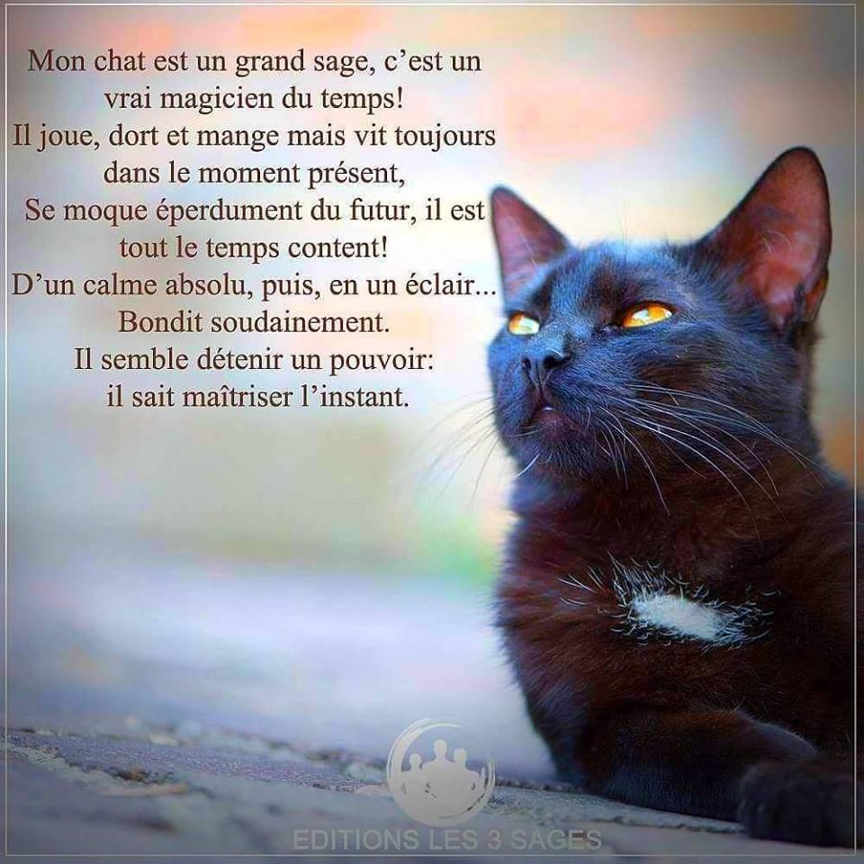 Pour les amoureux des chats 48378410