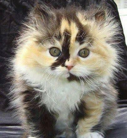 Pour les amoureux des chats 49400010