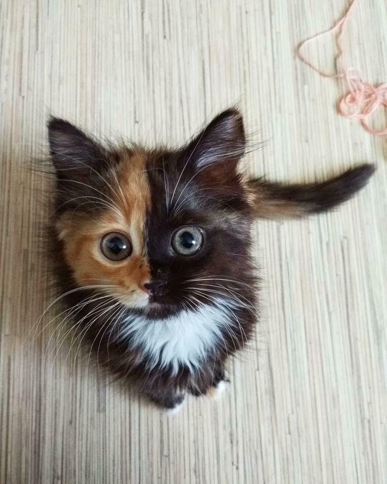 Pour les amoureux des chats 49900510