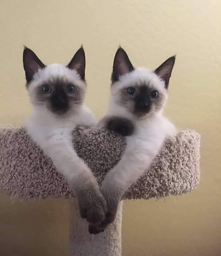 Pour les amoureux des chats - Page 2 52052010