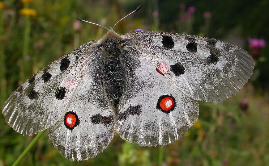 superbes papillons! 6f45e110