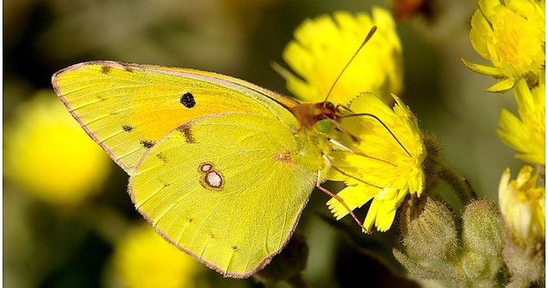 superbes papillons! 6f45e111