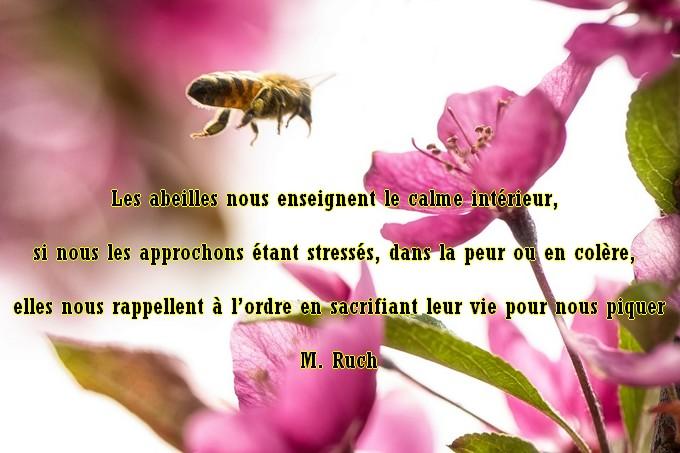 Les abeillent nous enseignent Abeill12
