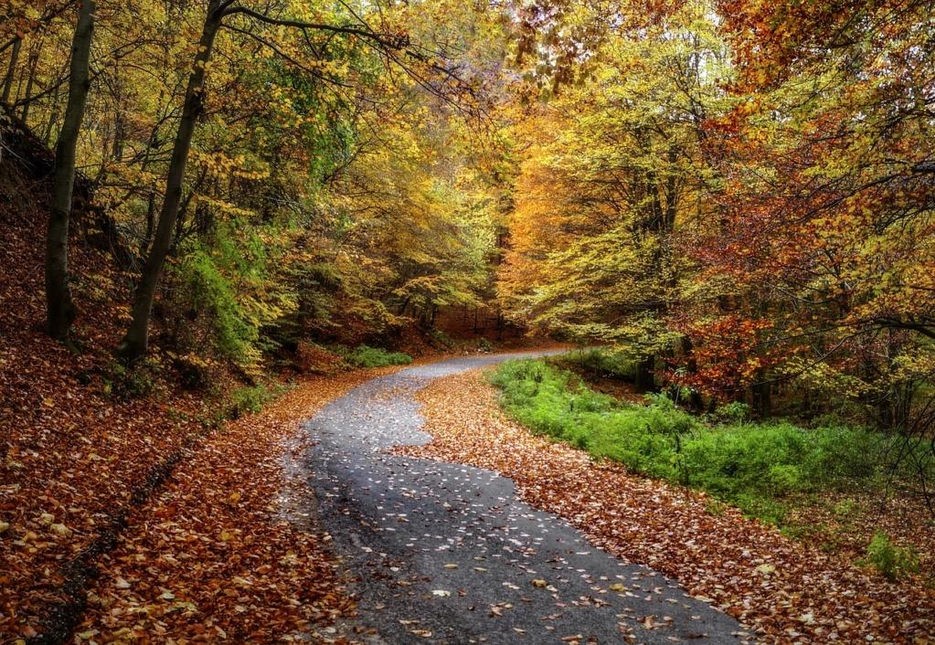 L'automne Autumn18