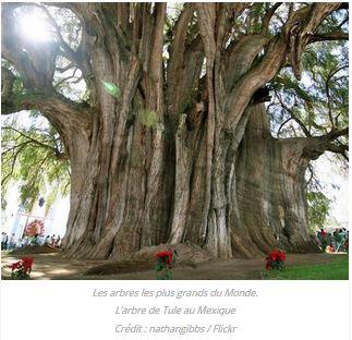 Hommages aux arbres - Page 4 Captur30