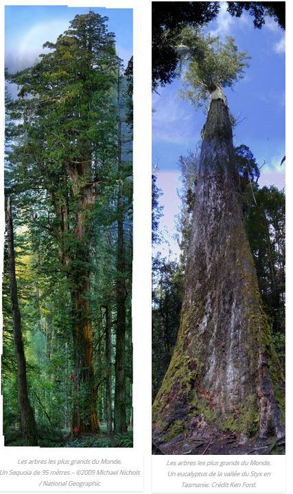 Hommages aux arbres - Page 4 Captur31