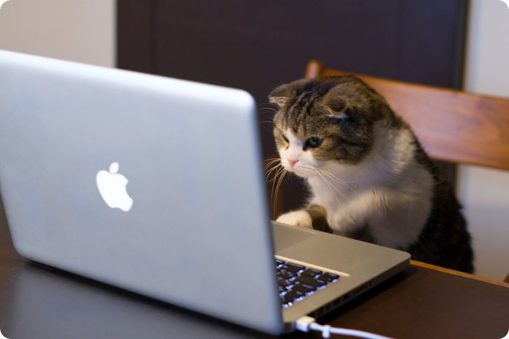 Pour les amoureux des chats Chat-d10