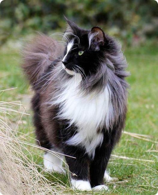 Pour les amoureux des chats Chat-n10