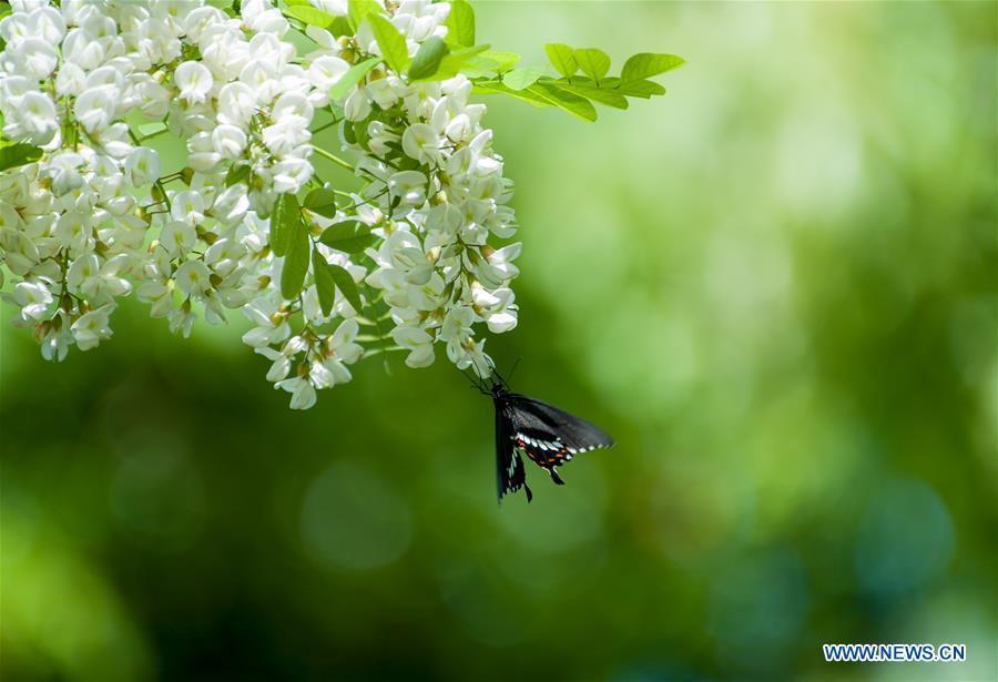 superbes papillons! - Page 2 D8da9a10