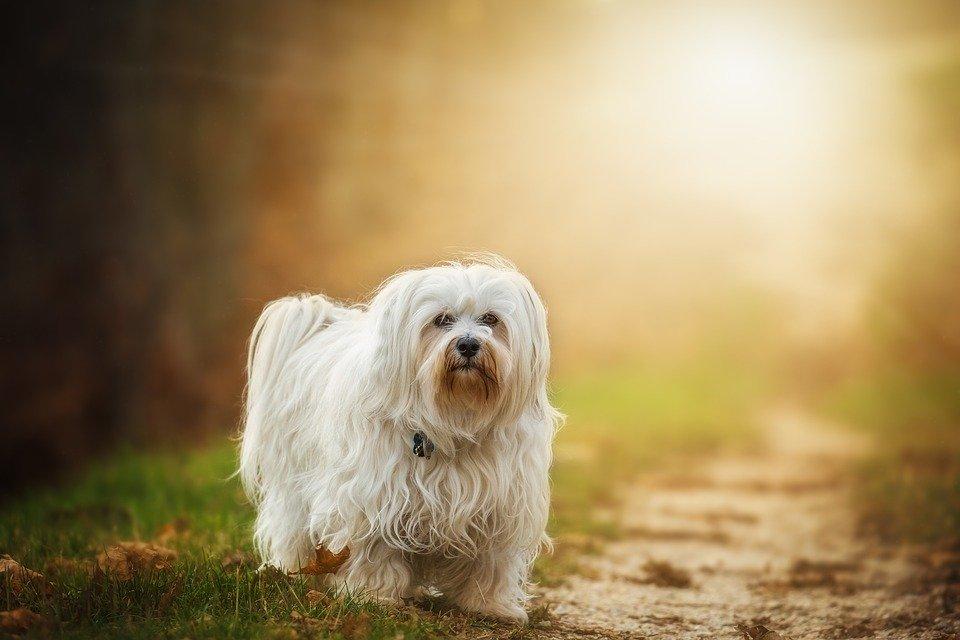 Avez-vous déjà rêvé être un animal ? Dog-1110