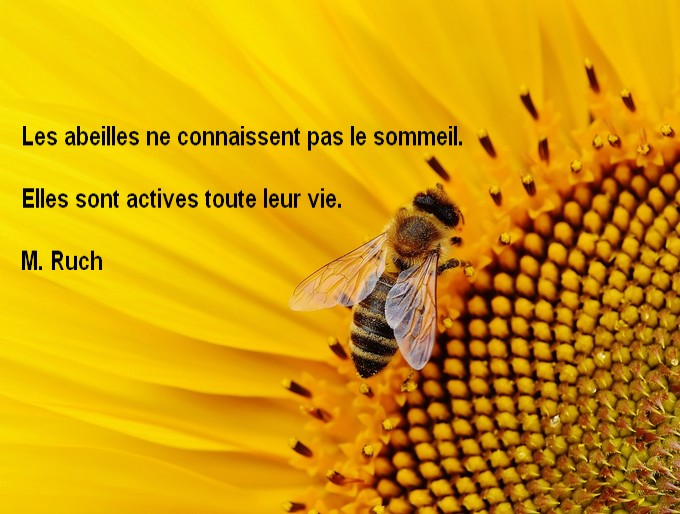 Les abeilles ne dorment pas Fabeil10
