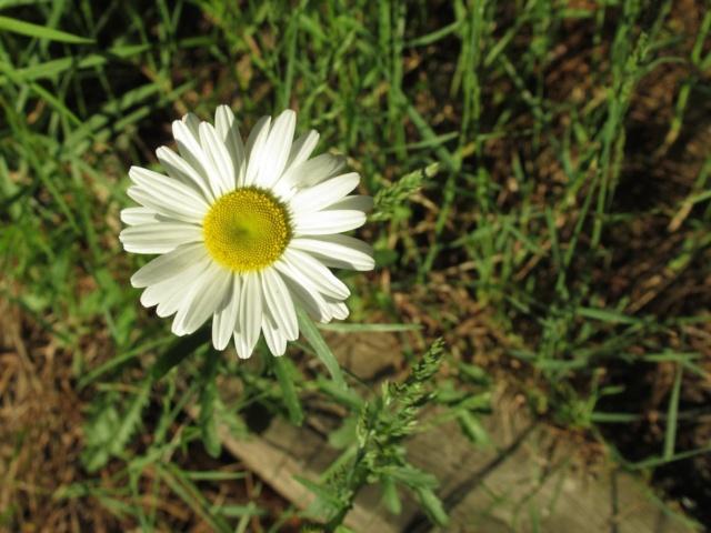 «Résistances poétiques» Flower17