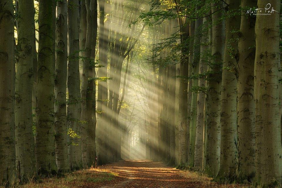 Pas de porte dans la forêt Il_ny_10
