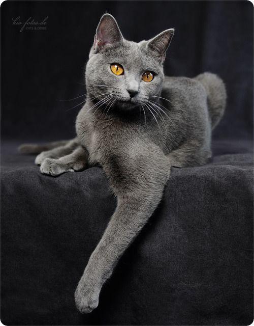 Pour les amoureux des chats Magnif10