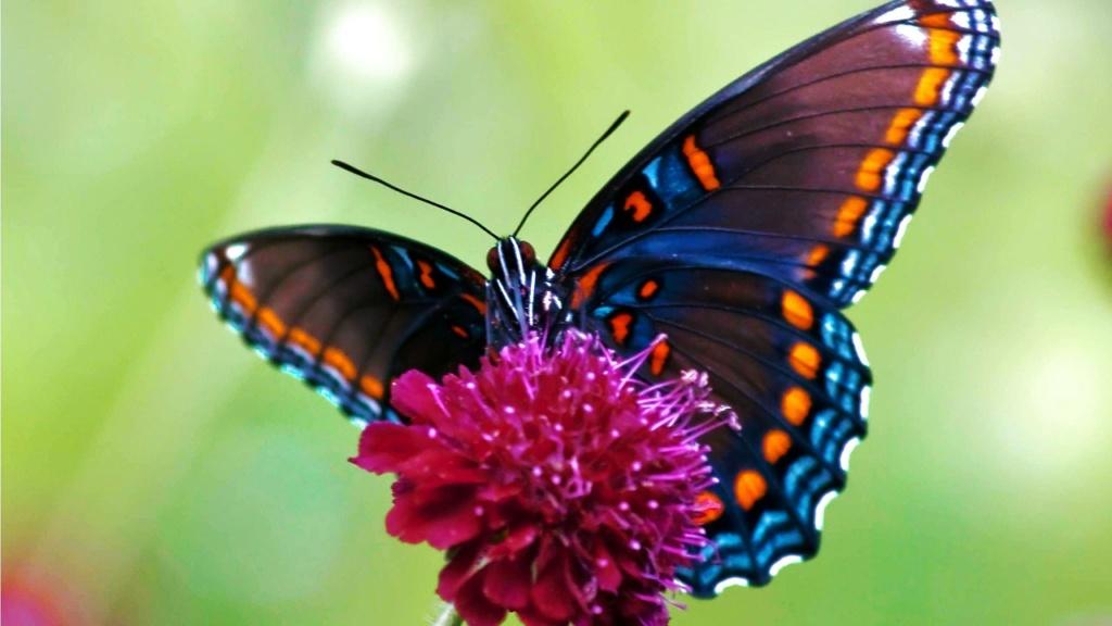 superbes papillons! Maxres10